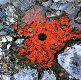 Natural artwork by Andy Goldsworthy