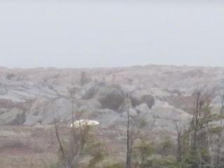 Polar Bear or Rock?