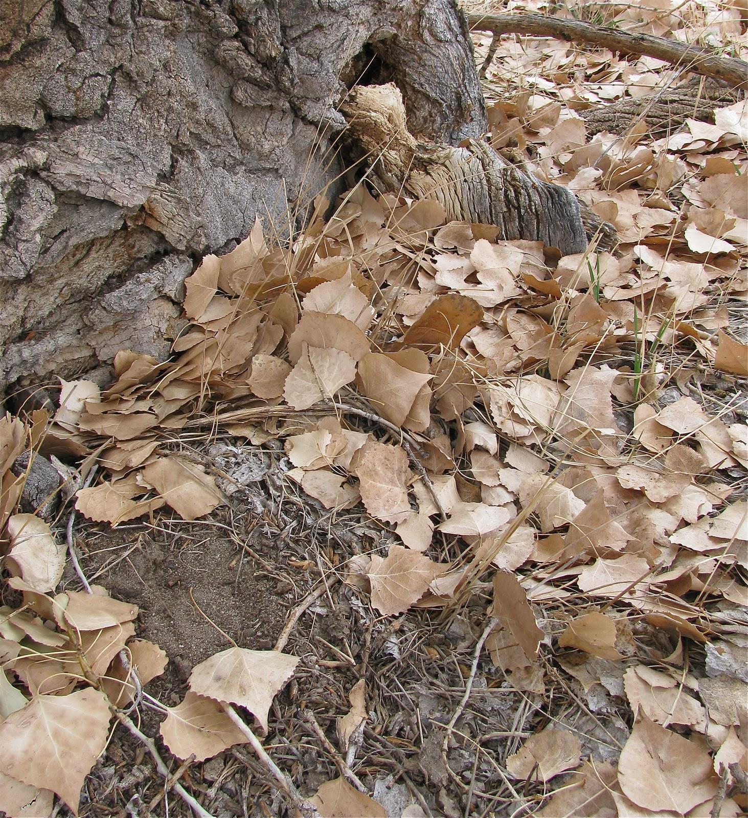 Standing Into Danger November Cottonwood