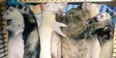 Lima Kisah Persahabatan Hewan Paling Haru di Dunia