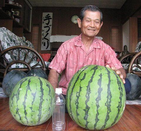 17.5キロ巨大スイカ収穫、知花邦夫さん