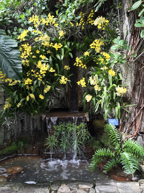 Longwood Gardens waterfall with yellow blooms
