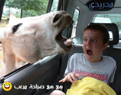 صور غريبه جدا | اجمل الصور المضحكة | صور مضحكة