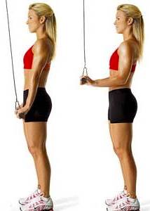 Stand Pulley Triceps Extension with variable grip