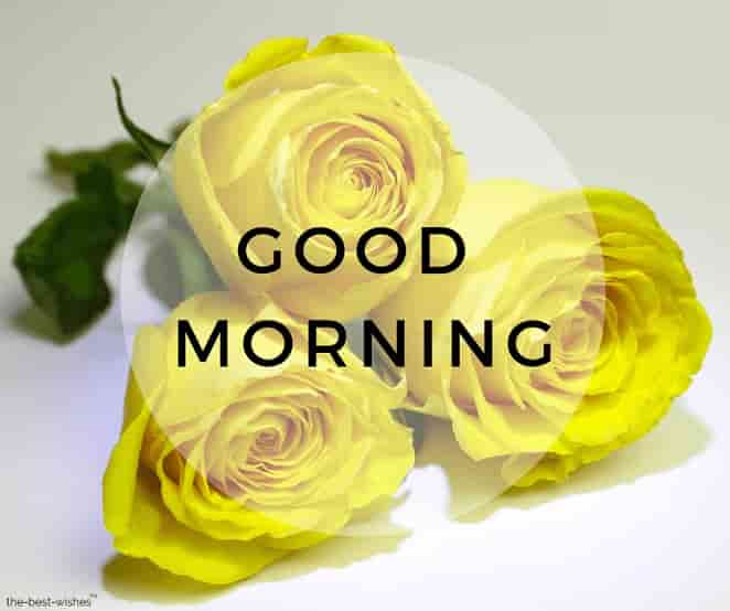 good morning images with yellow roses