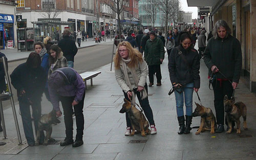 Four puppy walkers stopped and looking around Exeter highstreet