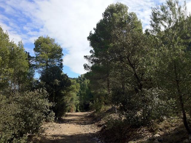 Cami del Pou del Carrascar de l'Arguenya
