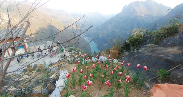 Vườn hoa khổng lồ tại Hà Giang