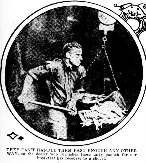 Eating More Fish and Seafood For The War Effort - Public Ledger 9 ...