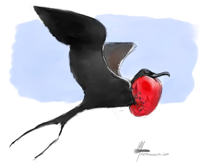 Magnificent frigatebird bird painting by Artmagenta