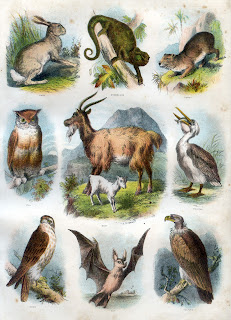 Animals and birds from Brown's Self-Interpreting Family Bible