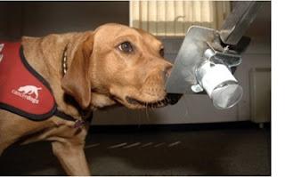 10 Hal Tak Terduga yang Dapat di Cium Anjing