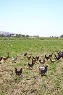 Riverdog Farm Nopalize Seasons