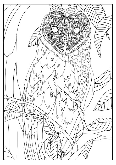 Free Coloring Page Coloringadultbarnowlbymizu Exclusive
