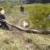 ชาวบ้านพบ งู ขนาดใหญ่ ช่วยกันจับลากขึ้นจากทุ่งป่ากลางนา !! เมื่อเห็นหัวงูเเล้วถึงกับช็อค!! (ชมคลิป)