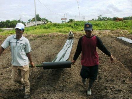 Mr Lana s Blog PENGERTIAN Mulsa Plastik Hitam Perak MPHP