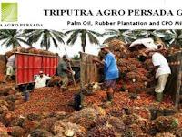 Lowongan Kerja PT. Sriwijaya Agro Persada