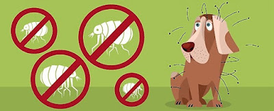 Protect Your Dog Against Ticks, Fleas