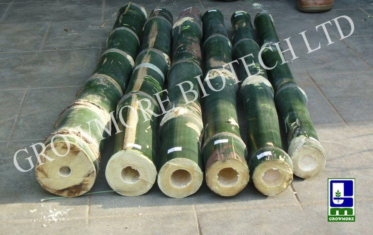 Beema Bamboo: Beema/Bheema Bamboo