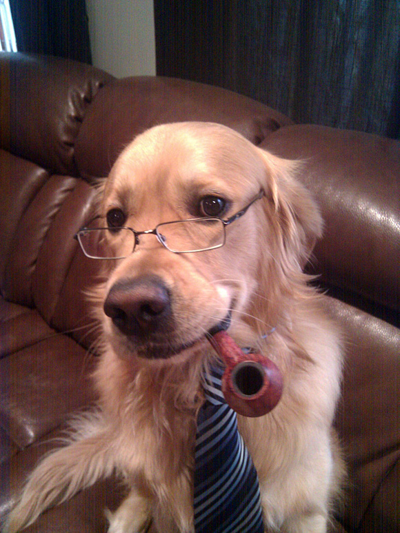 dogs glasses cute dog funny animals animal pets admin posted am wear