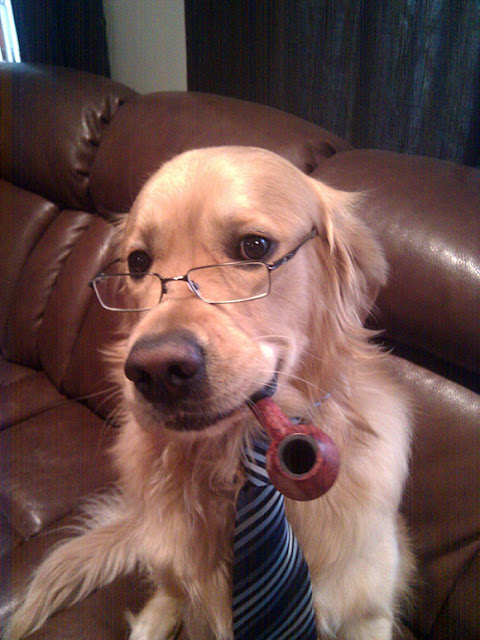20 Cute Outfits For Black Teen Girls: 20 Cute Dogs With Glasses