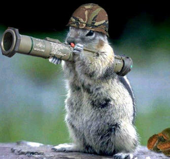Wallpapers funny animals with guns pictures and images - Pictures of funny animals with guns ...