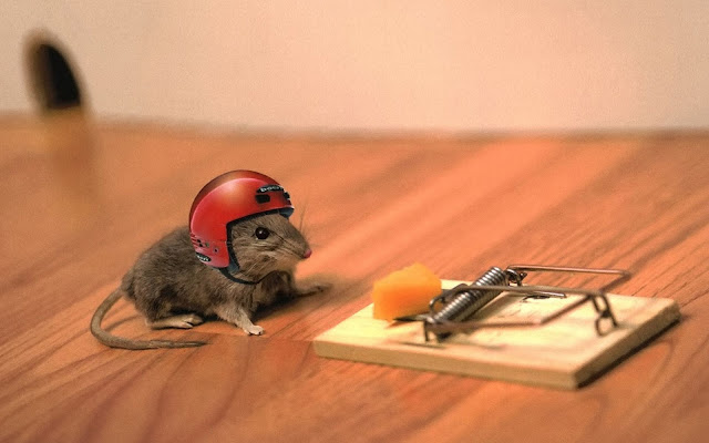 Perangkap Tikus