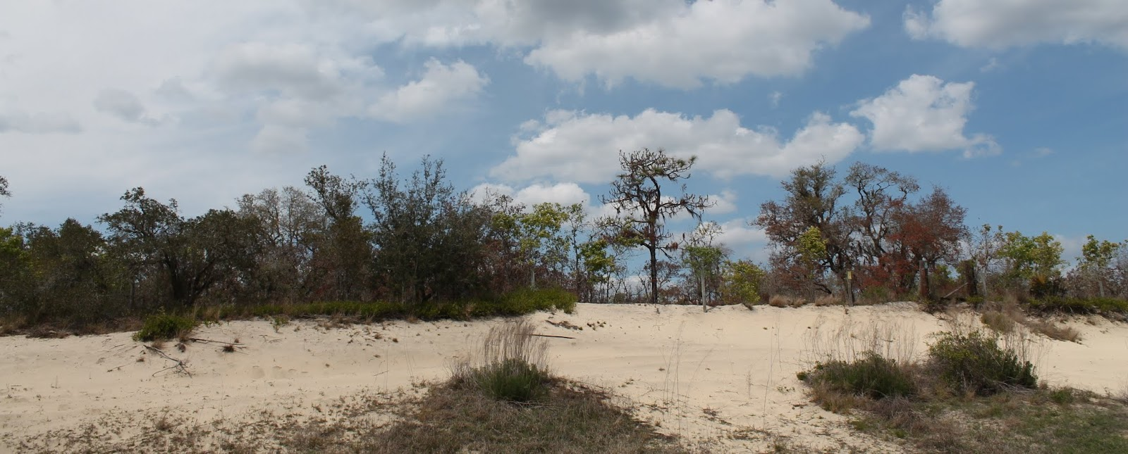 Las arenas de lo que millones de años atrás fueron playas a más de 100km del actual océano