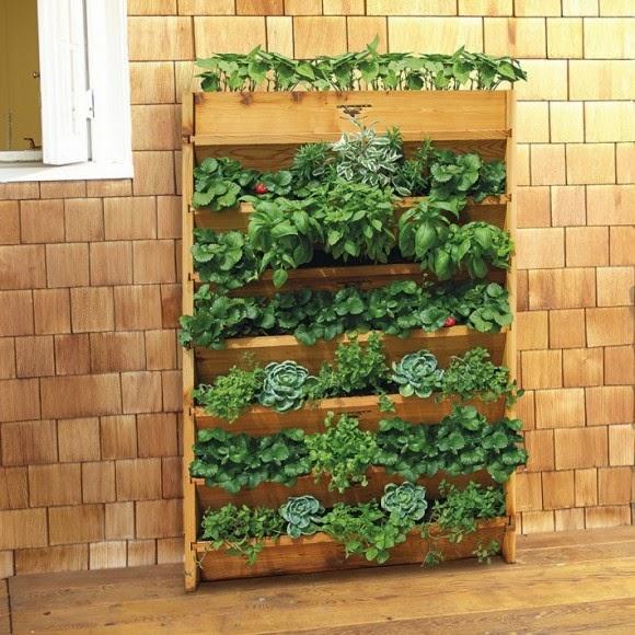 Le difficolt vanno superate il giardino verticale in casa for Giardino verticale