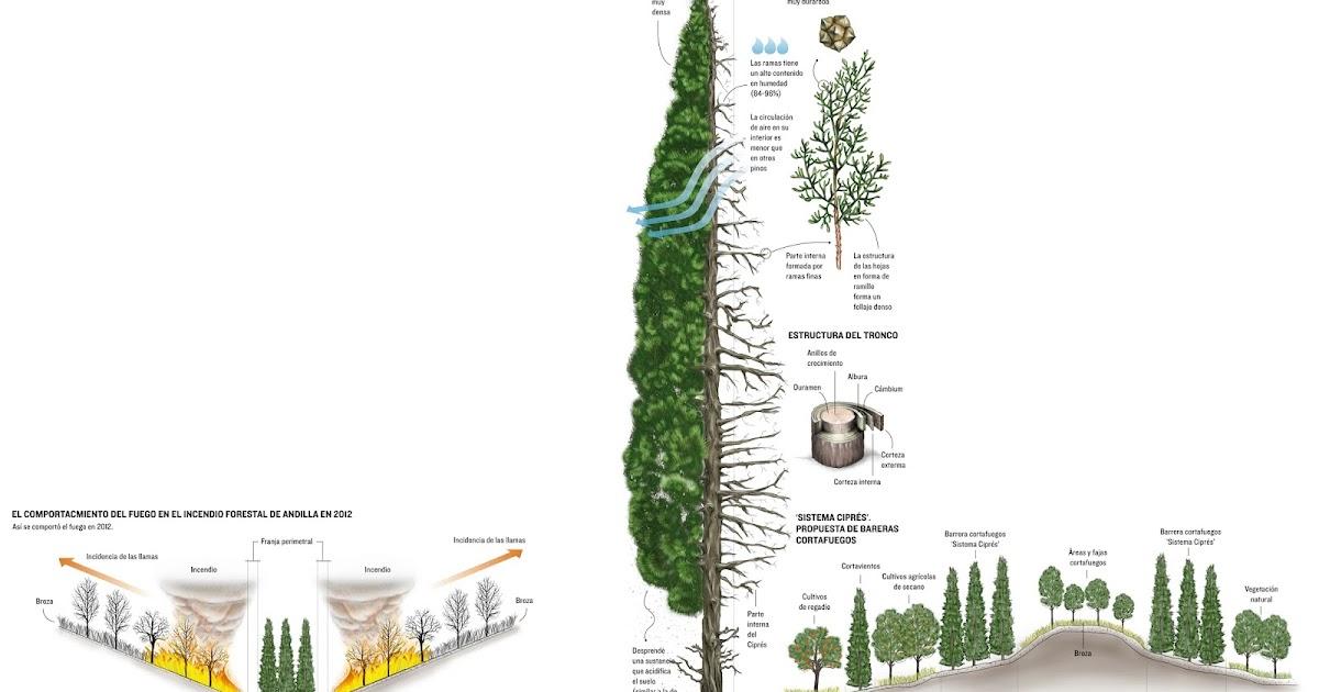 Infografia periodistica y dise o gr fico caracter sticas - Disenos textiles del mediterraneo ...