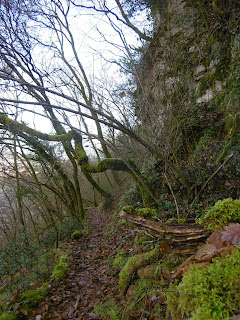 sentier de feuilles qui monte, malooka