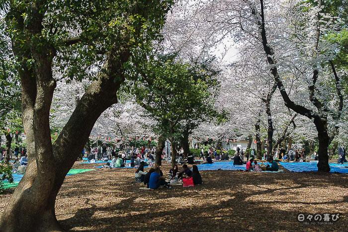 pique nique su hanami au parc Ueno