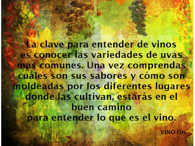 catar-entender-vinos-vino on