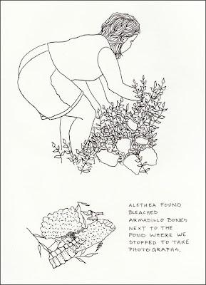 It's About Art and Design: Armadillo Bones