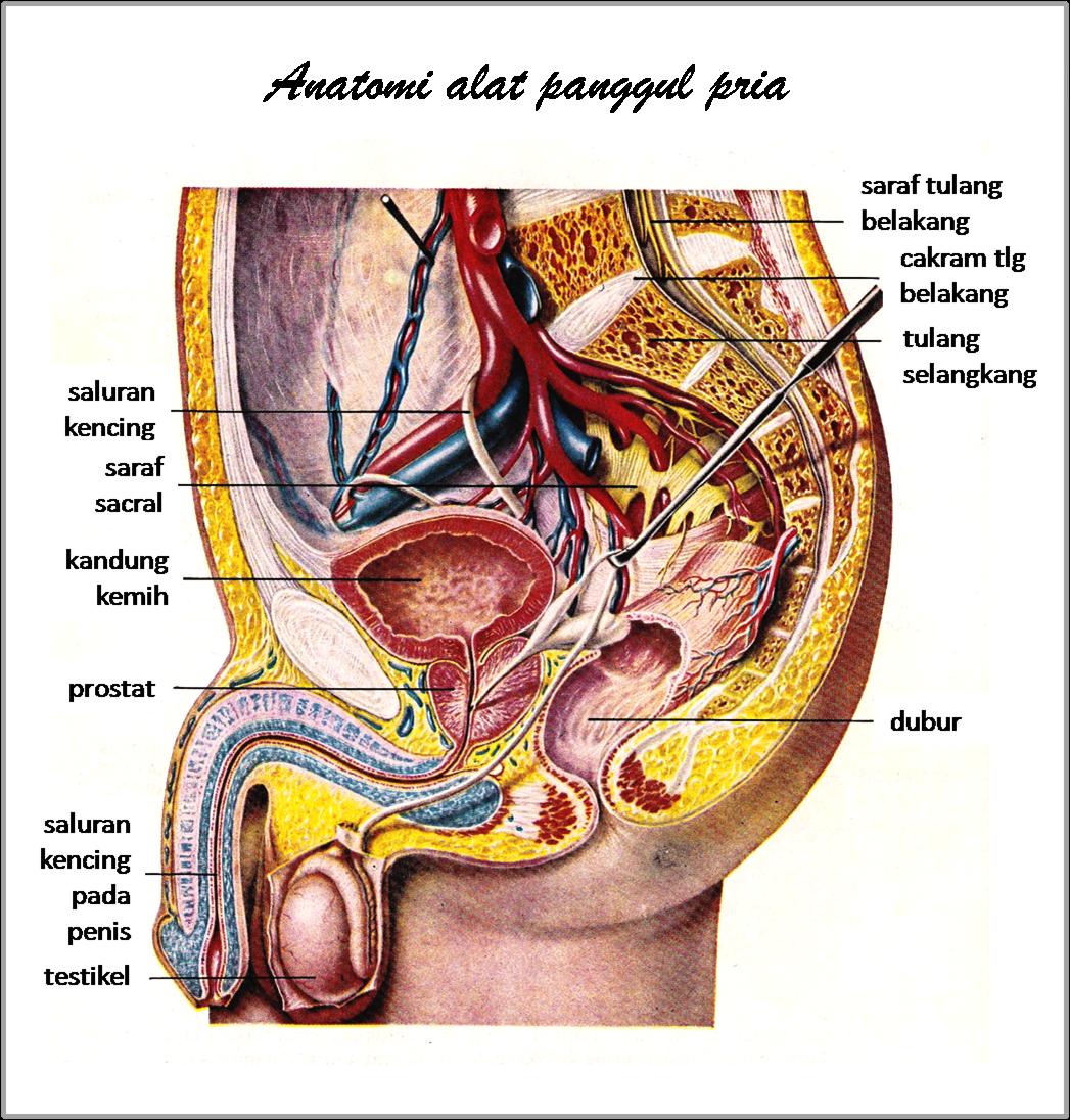 Celah and vagina and gambar