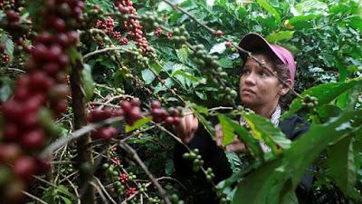 Peluang Bisnis di Lampung