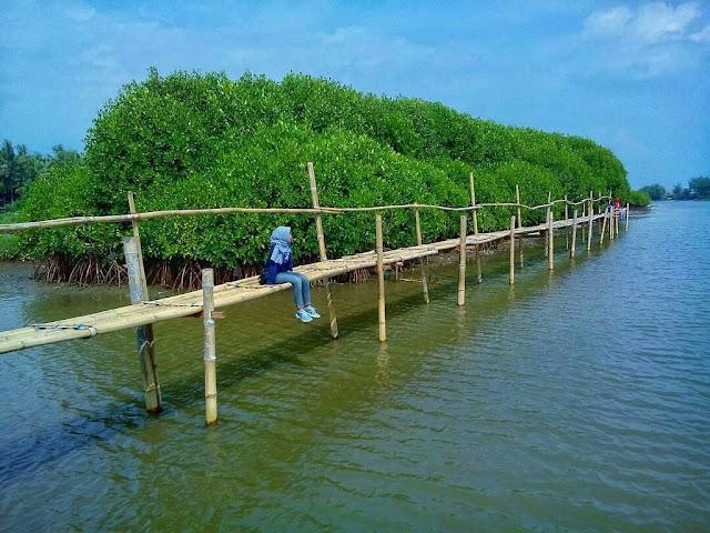 Lokasi Hutang Mangrove Kulon Progo