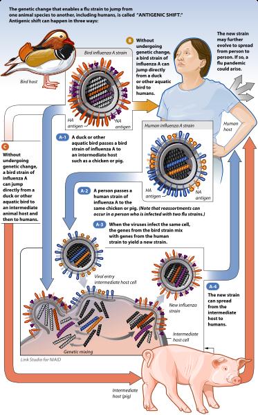 Infection Landscapes: Influenza