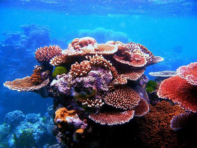 Kingdom of coral lies beneath Vinh Hy Bay 3