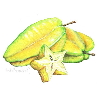 Starfruit sketch