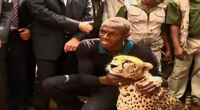 Beautiful Animals Safaris: The Fastest Cheetah in the ...