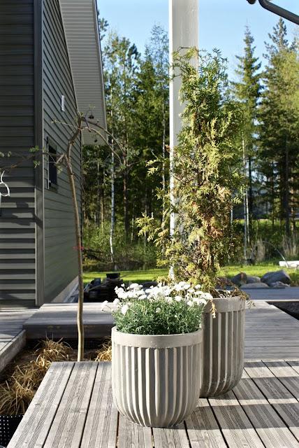 zicos.fi, lehtikuusi, kukka-amppeli, grillikatos, kesäkeittiö, moderni piha, house doctor, ruukku