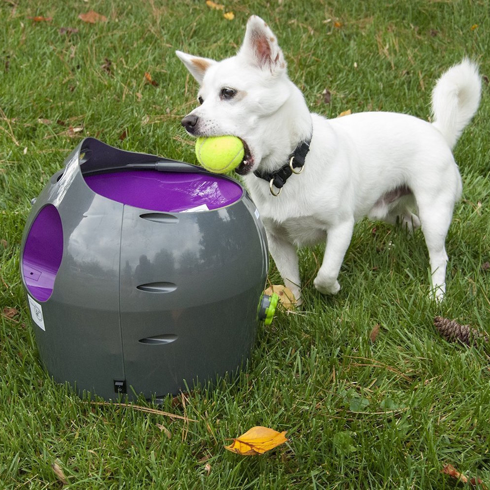 How To Train Your Dog To Fetch The Ball
