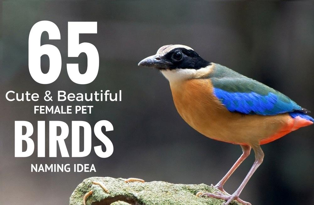 65 Beautiful Female Pet Bird Names Idea