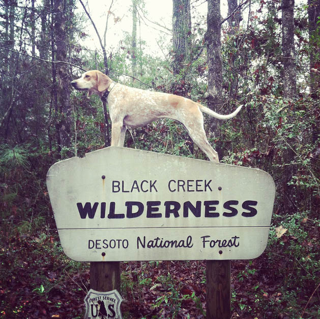 Maddie on forest sign