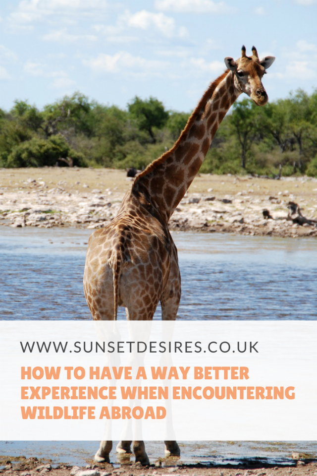 Banner with title How To Have A Way Better Experience When Encountering Wildlife Abroad with a picture of a giraffe near a river.