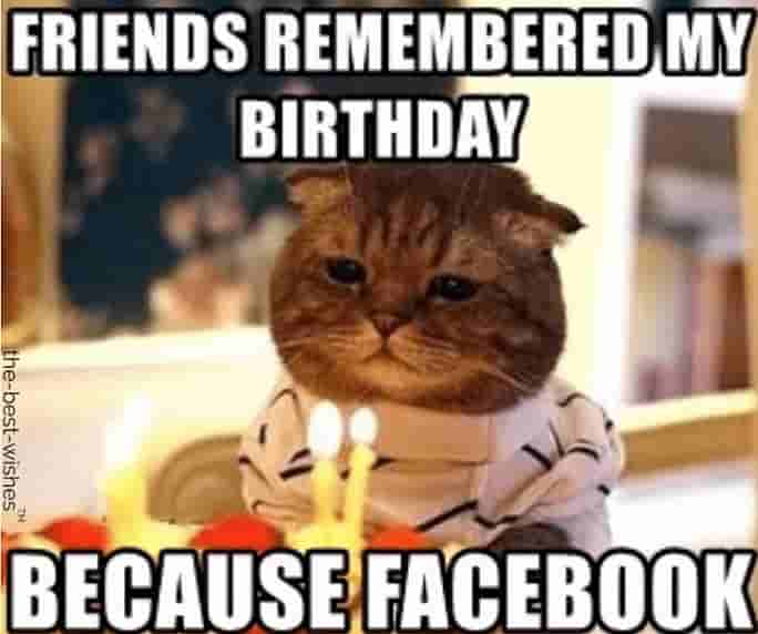 cute cat facebook birthday memes for friend