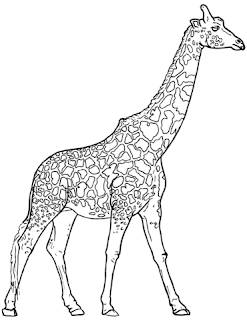 Realistic Giraffe Coloring Pages Ideas For Print