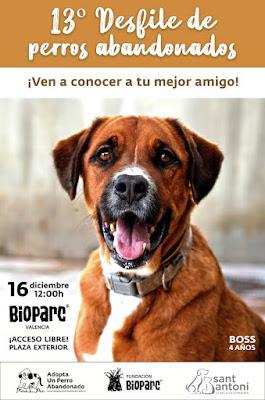 13º desfile de perros abandonados Bioparc