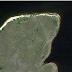 Existe um pentagrama desenhado em um uma floresta na Província de Kostanay, no Cazaquistão.